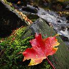 Autumn by Ian Benninghaus