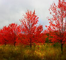 """"""" Fall Impressions """" by canonman99"""