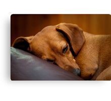 Goodnight Gracie Canvas Print