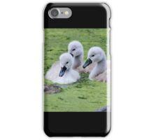 Mute Swan Cygnets iPhone Case/Skin