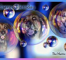 The Mattie Cancer Fund 2 by Samitha Hess Edwards
