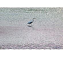 Water Walker Photographic Print
