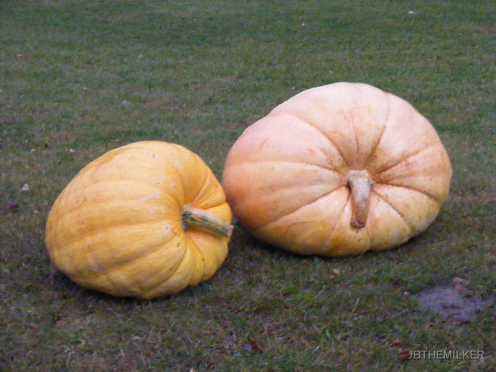 Two very big pumpkns by JBTHEMILKER