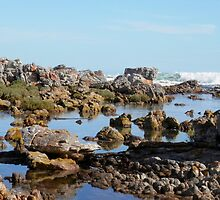 Rocky Shores by Tahliah