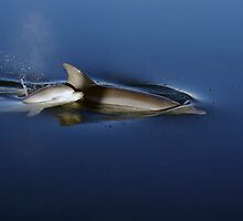 Dolphins by Aussiebluey