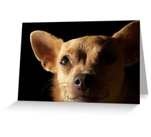 Doggy Smiles Greeting Card