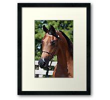 Arabian Horse Portrait Framed Print