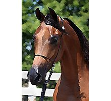 Arabian Horse Portrait Photographic Print