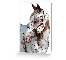 Appaloosa Yearling Horse Portrait Greeting Card