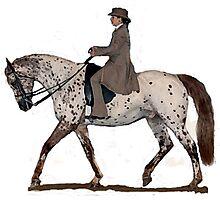 Appaloosa Saddleseat Horse Portrait Photographic Print