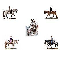 Appaloosa Versatility Horse Portrait Photographic Print