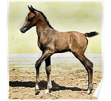 Arabian Foal In Watercolors Horse Portrait Poster