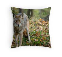 Dangerous Coyote Throw Pillow