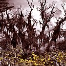 Tree Eerie Stylize filter by gregvm