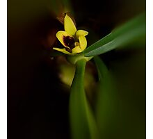 'picture perfect' Orchid 21 Photographic Print