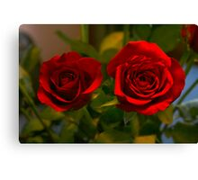 ruby roses Canvas Print