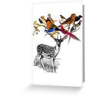 DEER BIRDY Greeting Card