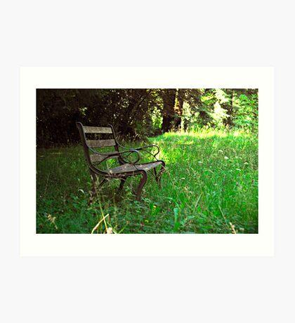 Woodland bench Art Print