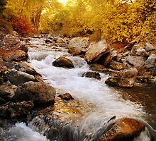 American Fork River - Golden Trees by Ryan Houston