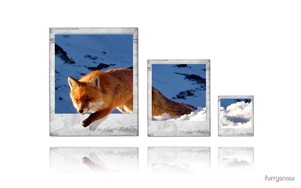 fox polaroids by furrysnow