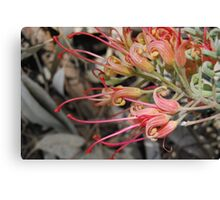 Grevillea In The Wind Canvas Print