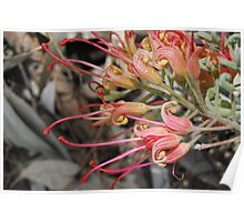 Grevillea In The Wind Poster