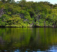 Mangrove by becks78