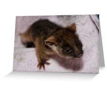 Baby Ringtail Possum Greeting Card