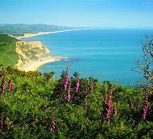 Dorset's Jurassic Coast by Nigel Finn