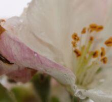 Spring blossoms in the rain Sticker