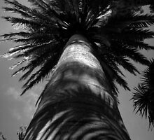 Scary Tree- Adelaide Botanic Gardens Palm by Ben Loveday