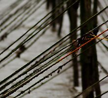 Cree Nets by Andy  Christopherson