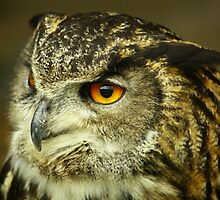 eagle owl by scott hanham