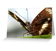 Oleander Butterfly Greeting Card