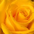 Yellow Rose by flowers2love