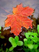 Autumn is coming by Eugenio