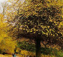 Autum in Heaton Park, Manchester by Philip Gerrard