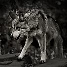On The Prowl by Scott Denny