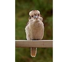 I am just a small bird!! Photographic Print