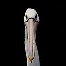 Pelican by Tom Newman