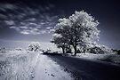 Journey to Heaven by Prasad