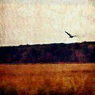 Marsh at Dawn by Erin Kroll