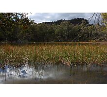 Afternoon at Dunn's Swamp Photographic Print