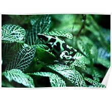 Green And Black Frog Poster