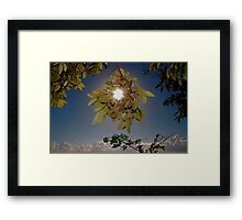 CLOUD FOREST VIEW Framed Print