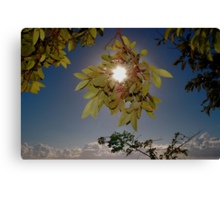 CLOUD FOREST VIEW Canvas Print