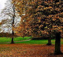 Fallen Leaves by Andrew Cryer