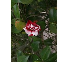 A beautiful flower Photographic Print