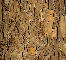 Bark texture by Melanie PATRICK