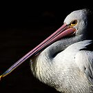 The Pelican by Kristina K